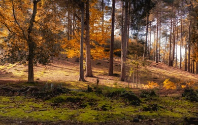 Photo of woodland in autumn